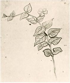 Branch with Leaves Vincent van Gogh Drawing, Black chalk, brush, ink Auvers-sur-Oise: June - July , 1890