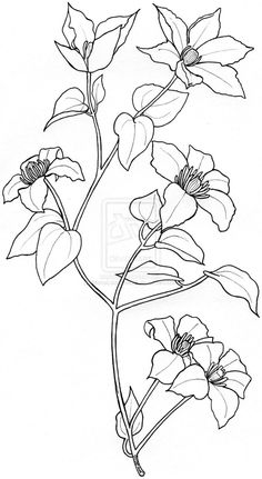 clematis tattoo design by ~MonaLisaSmile23 on deviantART