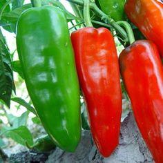 Vegetais de frutas eua touro chifre pimenta sementes de frutas é spicy moderado Bonsai planta sementes para casa e jardim 200 sementes(China (Mainland))