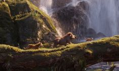 Simba, Timon and Pumba Lion King Video, Lion King 4, Lion King Movie, King Simba, Le Roi Lion Film, The Mighty Jungle, Lion Africa, The Lion Sleeps Tonight, Disney Shows