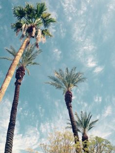 Palm Trees #coachella