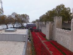 Tower of London Poppies - view from the rear - November 2014 Tower Of London, Rear View, Railroad Tracks, Poppies, November, Sidewalk, Explore, November Born, Side Walkway