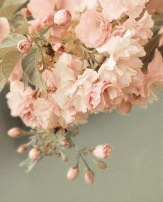 Soft Pink Hues   House & Home