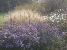 Gilles Clement, Aster, Landscaping Plants, Outdoor Projects, Impressionist, Perennials, Twilight, Garden Design, Journey