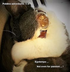 Egotempo... Latest tests presale for Preludio wristwatch!  The fierce Poldino tests Preludio in dangerous conditions ...   Egotempo, just for passion maybe ...  Enjoy your time with Preludio ... http://www.egotempo.it/