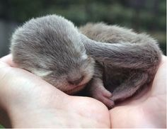 I love otters, there is something about them that just melts my heart.