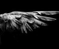 // maximum ride