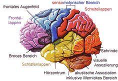 Netzwerk Gehirn Aufbau