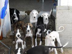 Una preciosa camada :) #perros #dogs #adorable #cute #mascotas #perros #amigospeludos #amigoscaninos #galgos #amigofiel #animales #pets
