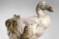 Comò composto dodo