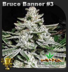 Cbd Seeds In Canada-Bruce Banner Clones Canada