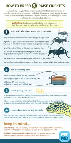 Cricket Breeding Guide: How to raise crickets | petMD