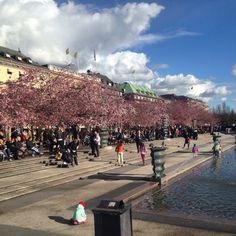 Stockholm in Kungsträdgården
