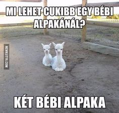 Cute Jokes, Funny Cute, Funny Jokes, Animals And Pets, Funny Animals, Cute Animals, Funny Photos, Cute Pictures, Little Pets
