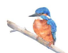 KIngfisher painting 3 bird watercolor painting - Print of watercolor painting - print, bird art, wall art, home decor Owl Watercolor, Watercolor Paintings, Original Paintings, Watercolours, Hummingbird Painting, Rooster Painting, Kingfisher, Cockatiel, Bird Prints