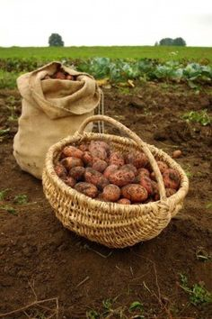 Love the basket. Should get one now that we are gardening on a smaller scale.