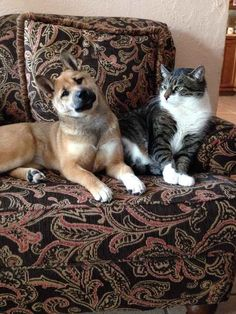 FUZZY CRITTERS: 17 Cats Meeting Puppies For The First Time