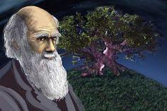 Meritocracy - Politics - Society - Social Darwinism