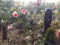 Also bei unserer Favorite Baumschule #Hitschke in Walluf blühen schon die herrlichsten Rosen. Gibt es einen schöneren Morgenspaziergang? Genießt das schöne Wetter - Euer Grimmel & Grammel ... Wir gehen dann schon mal ein Loch buddeln :)