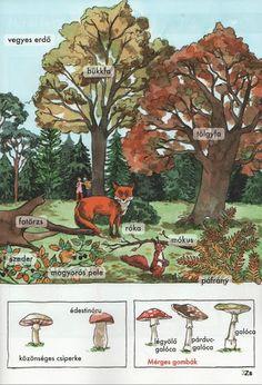 Kis tudósok szókincstára - Évszakok - Kiss Virág - Picasa Webalbumok Science And Nature, Kindergarten, Environment, Teaching, School, Animals, Languages, Studying, Animales