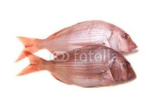 Stock photo available for sale at Fotolia: Snapper Fish On White