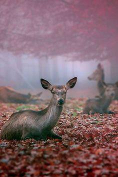 .Beautiful Photograph.!!!