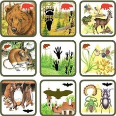 Pexetrio Plus: Savci Elementary Science, Science For Kids, Life Science, Science And Nature, Art For Kids, Animal Activities, Preschool Activities, Animals For Kids, Animals And Pets