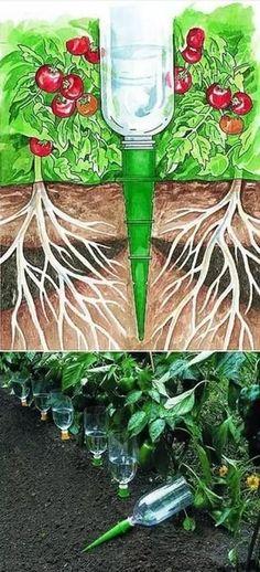 Przydatne pomysły na ogród