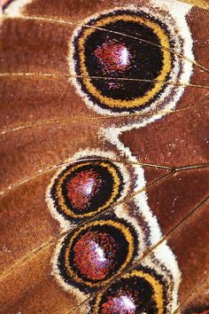 Close-up of moth wing. Moth Wings, Insect Wings, Papillon Butterfly, Butterfly Wings, Patterns In Nature, Textures Patterns, Close Up Art, Art Alevel, Insect Photography