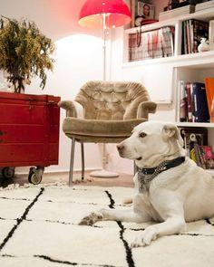 pinocho alfombra multicolor redondo en todos los tamaños (envío, Hause ideen
