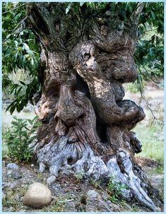 fuck trees we climb booeys
