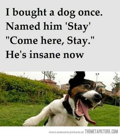I bought a dog once... - The Meta Picture