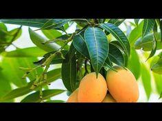 Remedios caseros y naturales para la acidez gástrica o