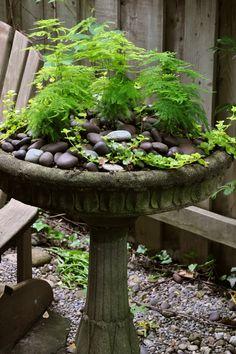 Another Bird Bath Arrangement Via Three Dogs In A Garden Love The Addition Of