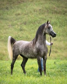 Insights on How to Buy the Correct Equestrian Boots Horses And Dogs, Cute Horses, Horse Love, Wild Horses, Animals And Pets, Most Beautiful Horses, All The Pretty Horses, Arabian Stallions, Arabian Horses