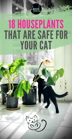 Cats can be tough to handle around houseplants. Do you know which houseplants are non-toxic for cats and which aren't? This list of 18 cat-safe indoor plants will help you when you have to decide a ne Cat Safe Plants, Cat Plants, Plants Toxic To Cats, Houseplants Safe For Cats, Easy House Plants, House Plants Decor, Indoor House Plants, Cat Friendly Plants, Begonia