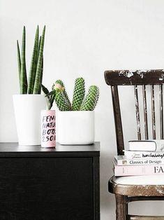Plantas em Vaso - cacto em móvel com cadeira decorativa