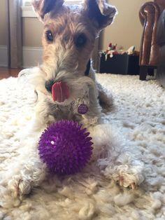 I got a new ball....