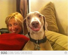 Funny dog is funny