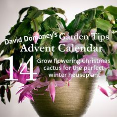 David Domoney's Garden Tips Advent Calendar Day 14