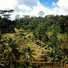 The Must-See Sites of Bali