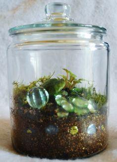 Baby Miniature Violet Terrarium Moss Living Art Medium Glass Apothecary Jar $40.00