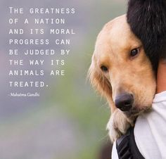 The Greatness of a Nation and its Moral Progress Can be Judged by the Way its Animals are Treated.  Gandhi