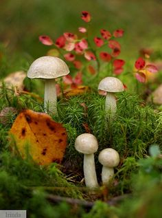creative-randomness:  themagicfarawayttree:  mushrooms  beautiful!