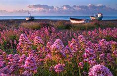 A vibrant display at Aldeburgh, Suffolk, England.  Parrish Colman of Ipswich, Suffolk