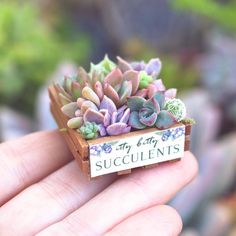 A crate of Itty Bitty babies to lighten up your afternoon! A crate of Itty Bitty babies to lighten up your afternoon! Succulent Arrangements, Cacti And Succulents, Planting Succulents, Cactus Plants, Planting Flowers, Succulent Gardening, Succulent Terrarium, Container Gardening, Succulent Ideas