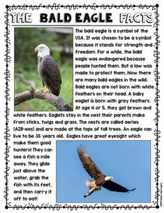 Informational text about the bald eagle…short and sweet - perfect for First Grade and Kindergarten Kindergarten Social Studies, Teaching Social Studies, Informational Writing, Nonfiction, Eagle Facts, Eagle Craft, Eagle Project, Text Dependent Questions, National Symbols