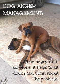 #Boxer thing | www.fordogtrainers.com #quote #dog