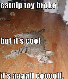 Catnip toy broke - Imgur