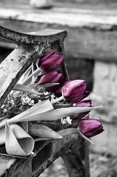 _PõP_of *PüRpLë* ·✳︎·P̤̊o̱͠ρ͙ ტ̳̅f̰͗ C̤͐o͚̿լ̱̀º̹͛Я͎̇·✳︎· Purple Tulips, Purple Haze, Shades Of Purple, Plum Purple, Deep Purple, Black And White Pictures, Black And White Colour, White Art, Color Splash